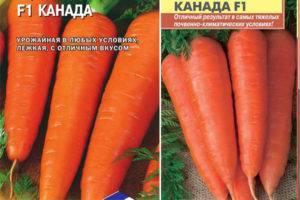 Морковь нандрин отзывы фото
