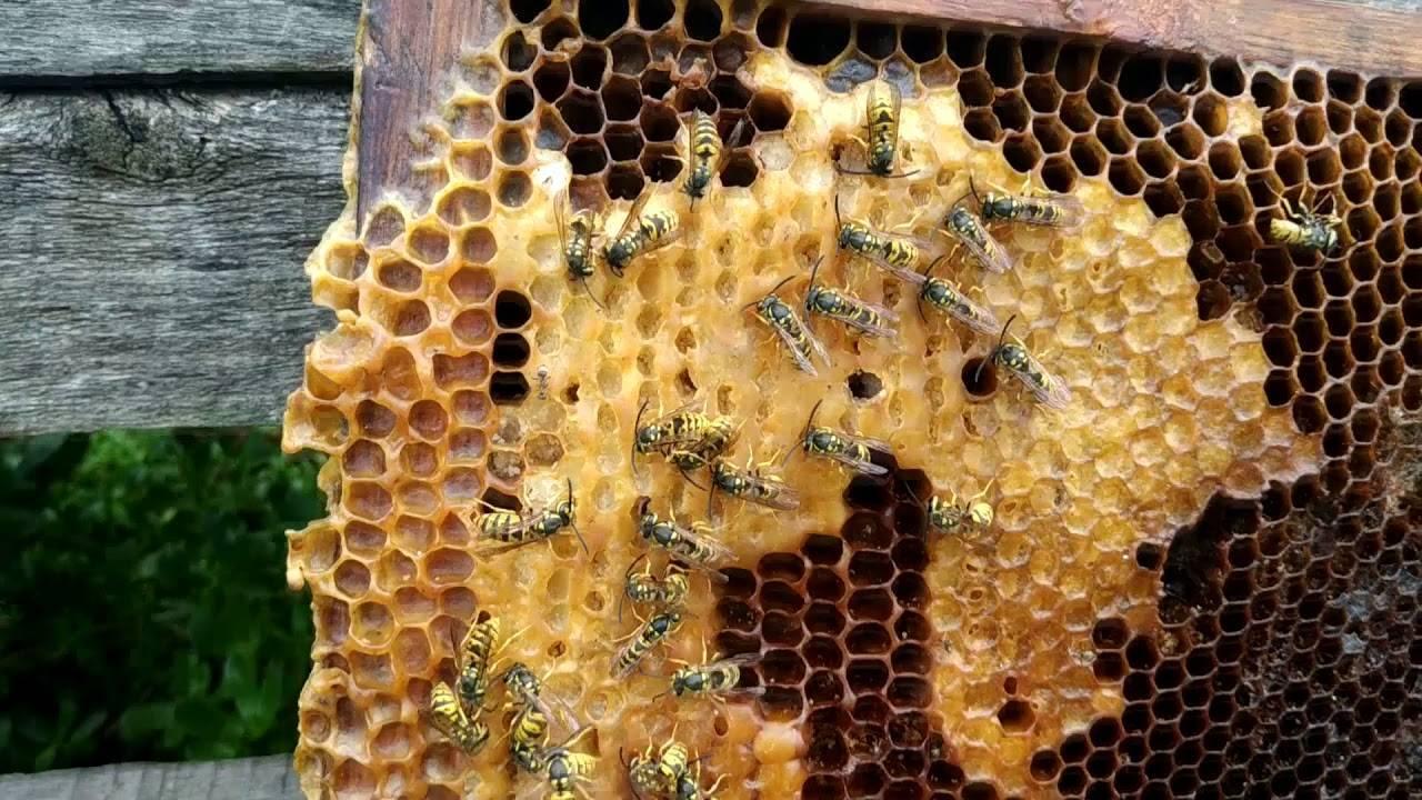 Как избавиться от пчел на даче
