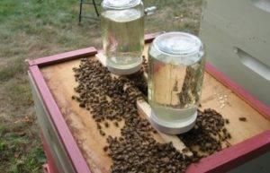 Весенняя подкормка пчел: различные виды подкормов