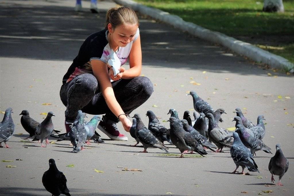 Чем лучше кормить голубей
