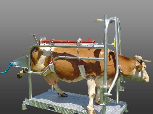 Как правильно ставить уколы коровам и телятам