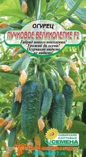 Характеристики огурца пучковое великолепие f1: описание агротехники, реальные отзывы