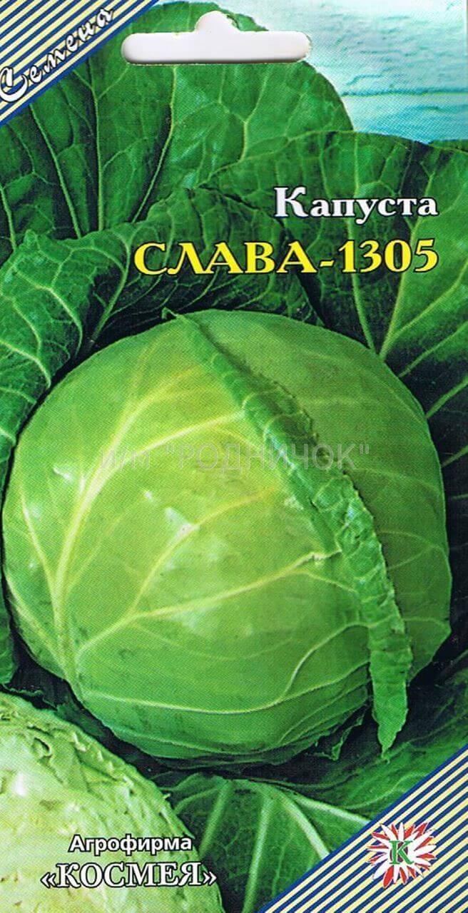 Неприхотливый холодоустойчивый сорт капусты «слава»