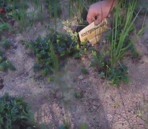 Сбор и заготовка листьев брусники в домашних условиях