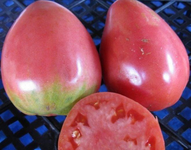"""Томат """"гулливер"""": описание и характеристика сорта, фото и видео материалы, рекомендации по выращиванию отличного урожая помидор"""