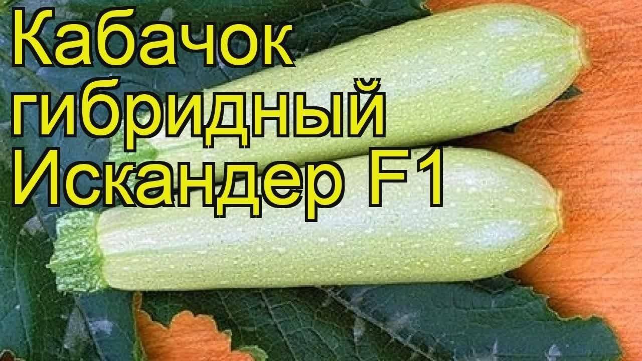 Сорта и разновидности кабачков