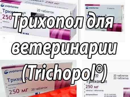 Лечение и исследование на трихомоноз КРС