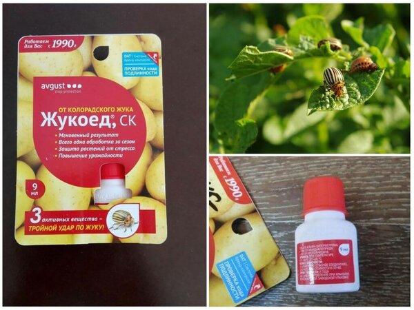 Инструкция по применению препарата «жукоед» от колорадского жука на картофеле