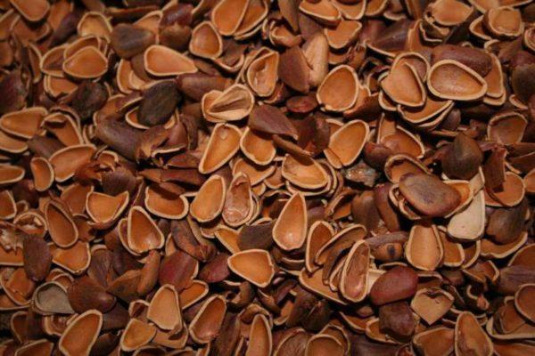 Применение ядер и скорлупы кедровых орехов в народной медицине: рецепты для лечения заболеваний