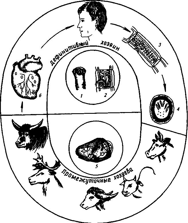 Гиподерматоз