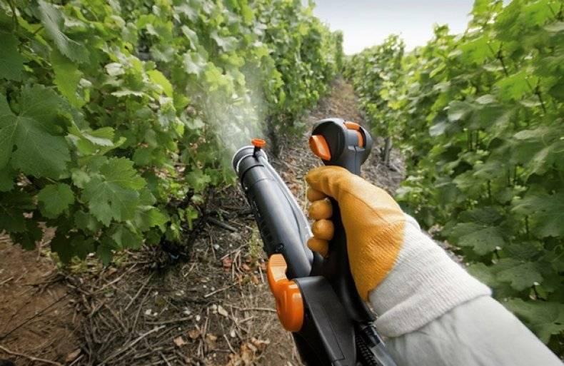 Пример баковых смесей для обработки винограда