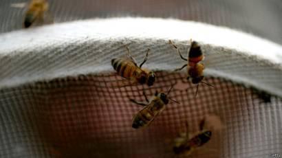 Что делать при укусе пчёлы?