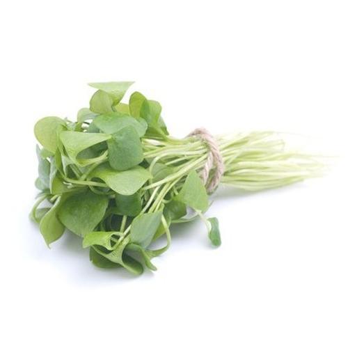 Портулак огородный — выращивание из семян