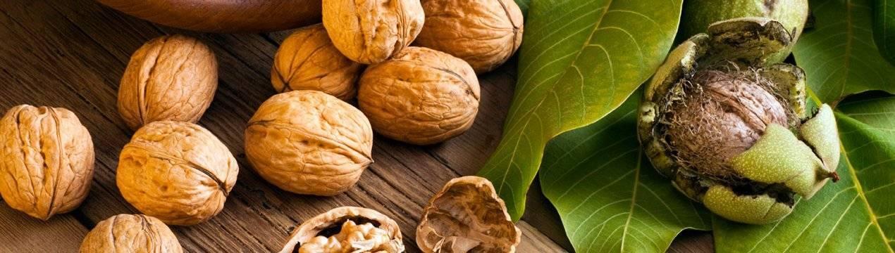 Листья грецкого ореха: лечебные свойства