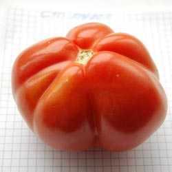 Томат «малиновый звон f1»: радует огородников стабильным урожаем