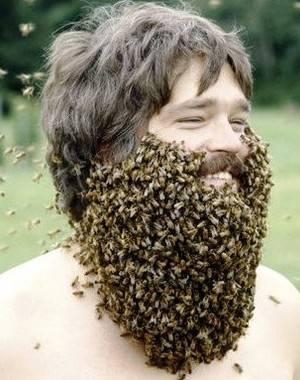 Роение пчёл и меры его предупреждения