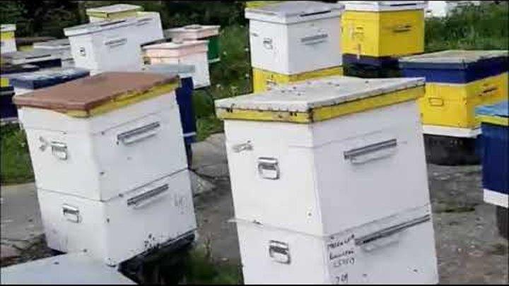 Весенние болезни пчел