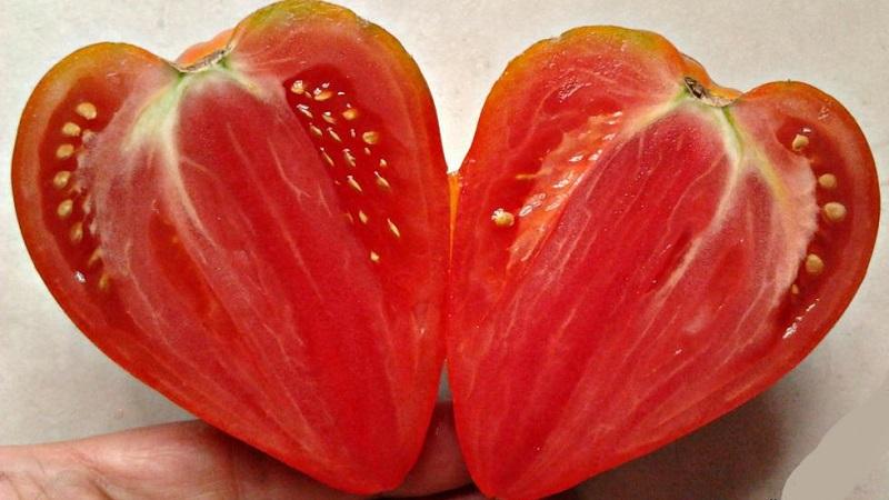 Томат «оранжевая клубника»: вкусный оранжевый гигант