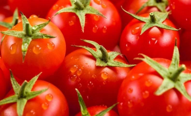 Томат Верлиока: отзывы, фото, урожайность