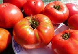 Как посадить и вырастить томат «гордость сибири»