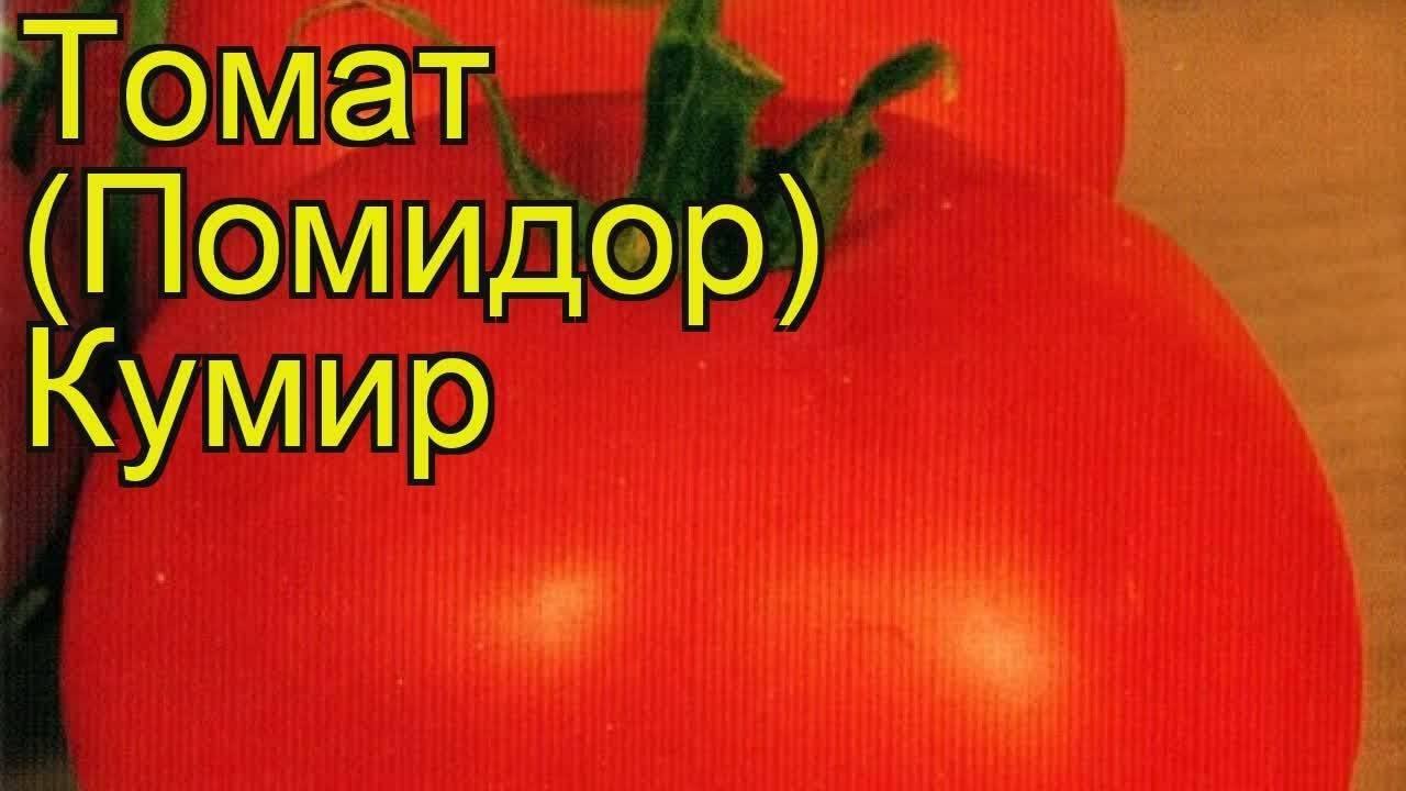 Сорт томата кумир