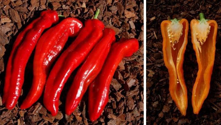 Перец рамиро: 85 фото, описание, характеристики, советы по выращиванию и посадке в открытый грунт