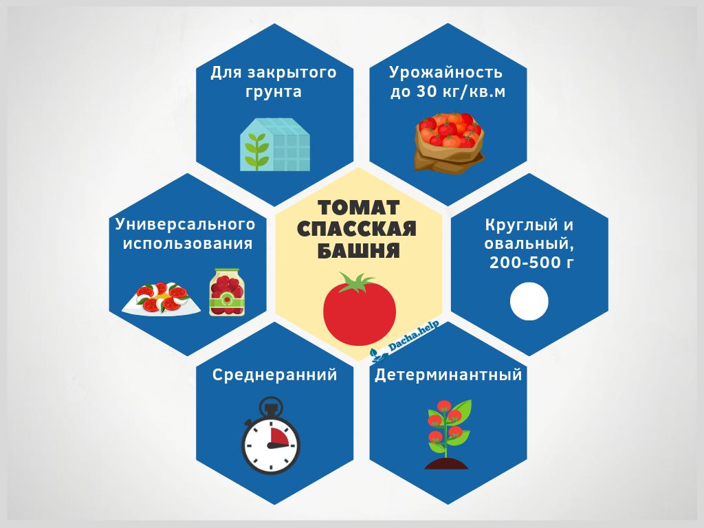 """Урожайный томат """"спасская башня"""": выращивание и уход"""