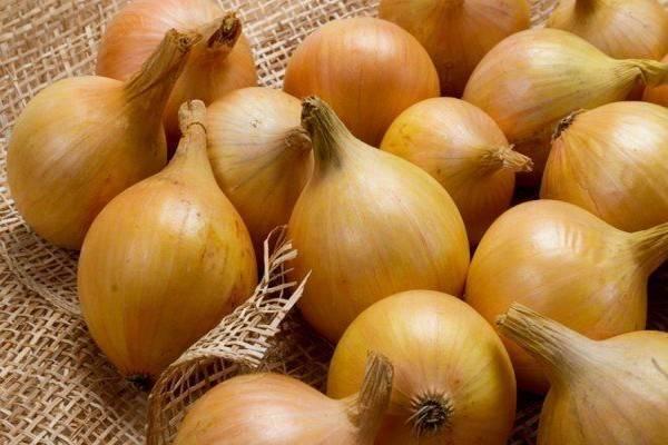 Неприхотливый лук с мягким вкусом – штутгартер стенфилд. описание сорта и особенности выращивания