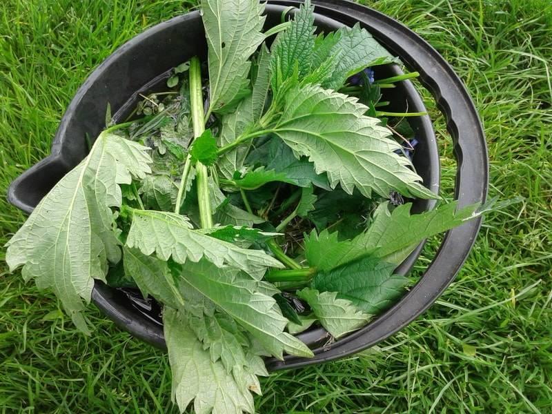 Удобрение из крапивы – как приготовить, применение