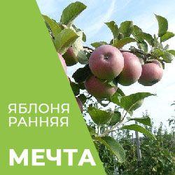 Яблоня мечта: описание сорта, фото, отзывы садоводов, видео