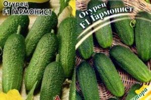Огурец хабар: характеристика и описание сорта, правила выращивания