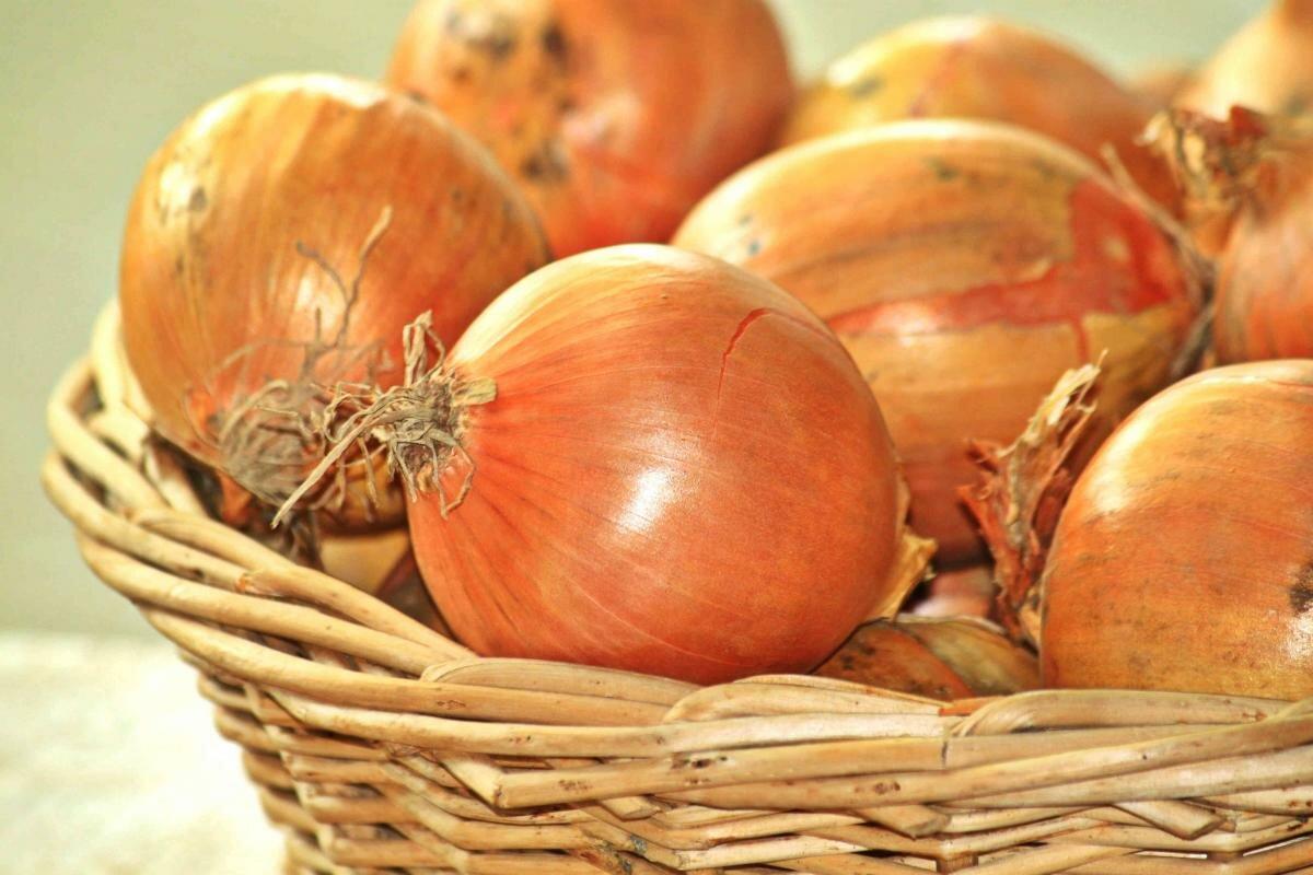 Подкормка рассады томатов настоем луковой шелухи