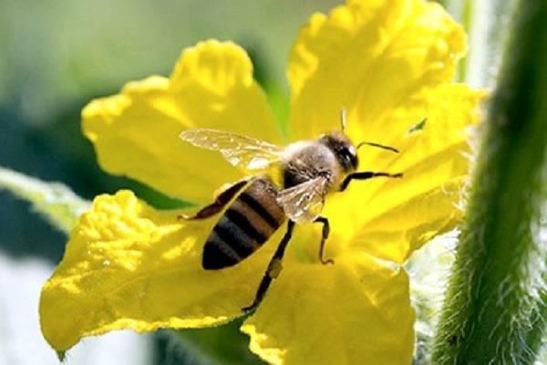 Трудовые будни общественных насекомых: что собирают пчелы пыльцу или нектар