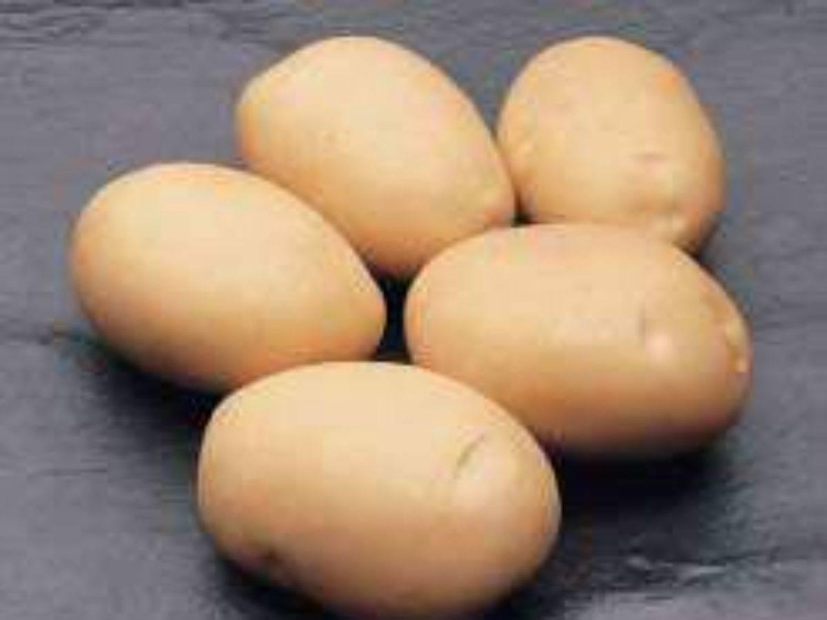 Сорт картофеля латона: описание, посадка и уход