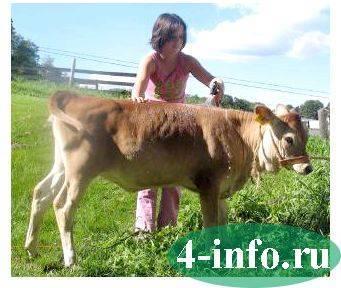 Клички коров (список), как назвать теленка