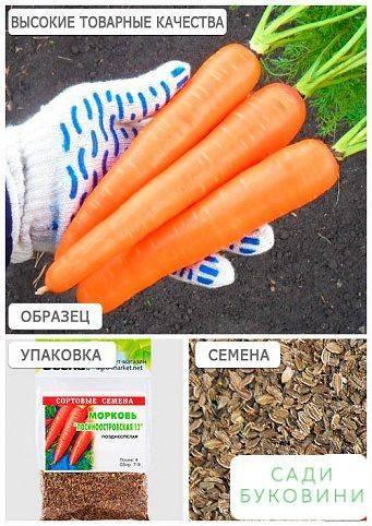 Морковь «лосиноостровская 13» (21 фото): описание и характеристика сорта, отзывы