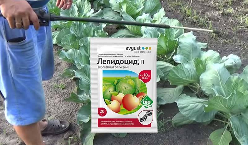 """Как применять """"лепидоцид"""" для обработки овощей, плодово-ягодных культур и цветов"""