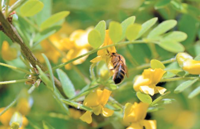 Сколько меда пчелы съедают зимой?