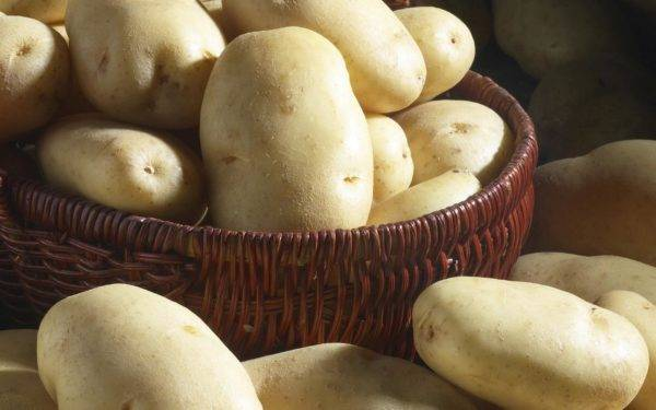 Вкусный и высокоурожайный картофель «санте»: описание сорта, фото, отзывы