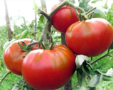 Томат полфаст f1: характеристика и описание сорта, отзывы, фото куста, урожайность