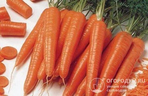Выбор и посадка лучшего сорта моркови