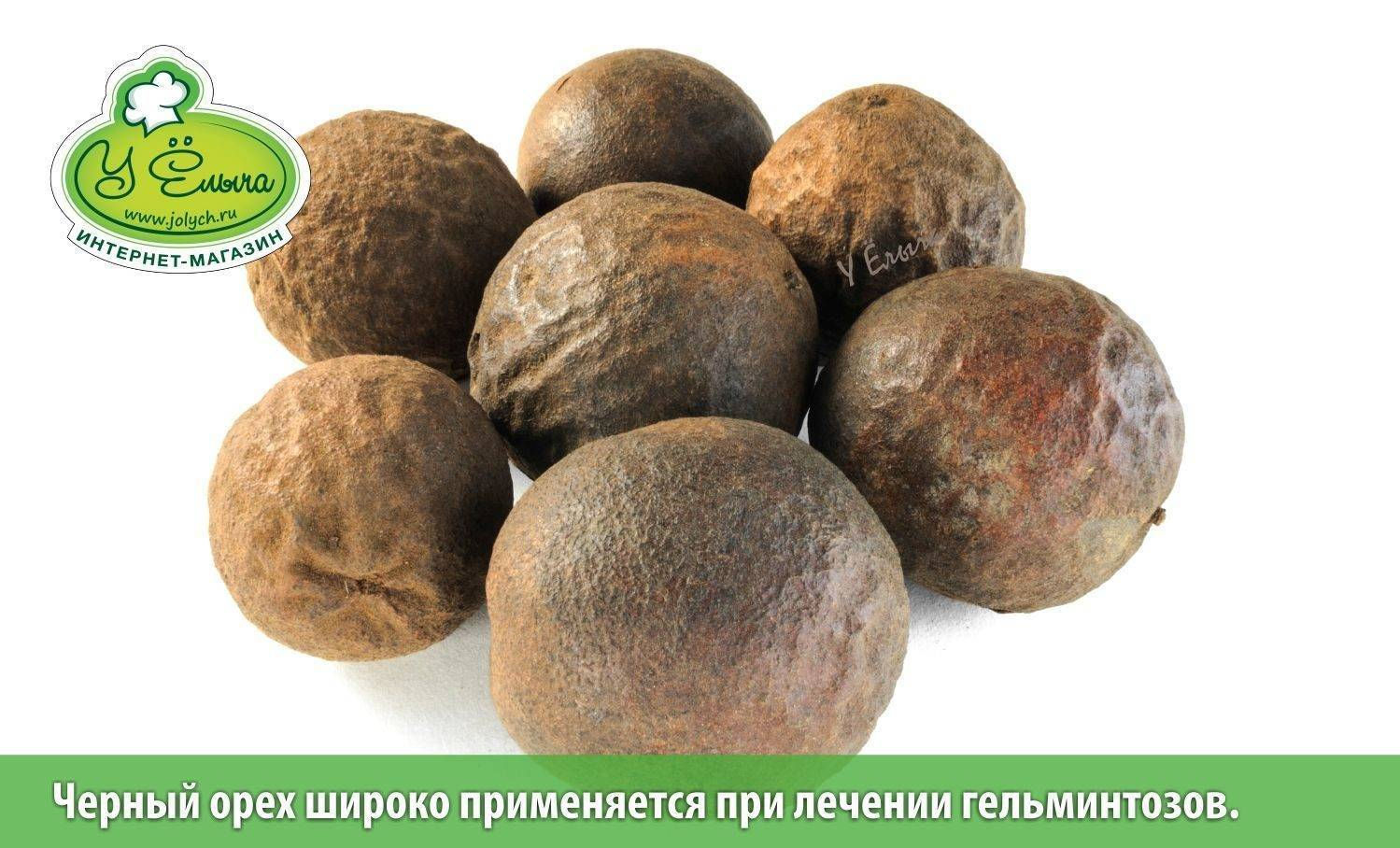 Польза и вред настойки черного ореха