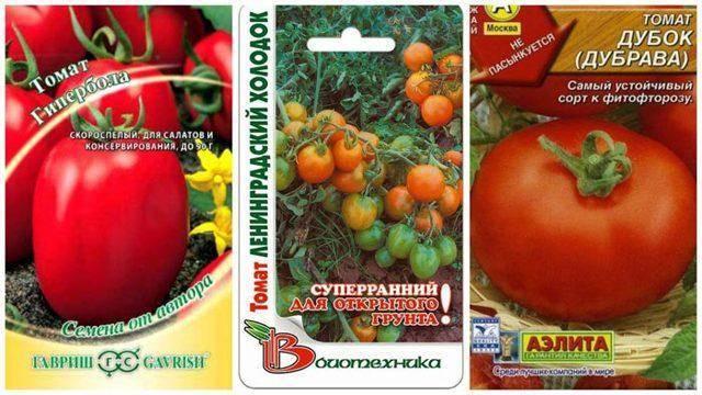 Лучшие сорта низкорослых томатов для теплиц