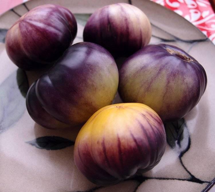 Высокоурожайный сорт с отличным качеством плодов — томат розанна f1: описание гибрида и советы по его выращиванию
