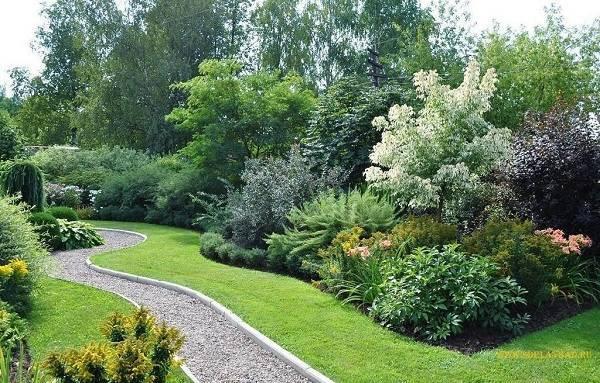 Хвойные композиции в ландшафтном дизайне сада: подбор растений + основы зонирования