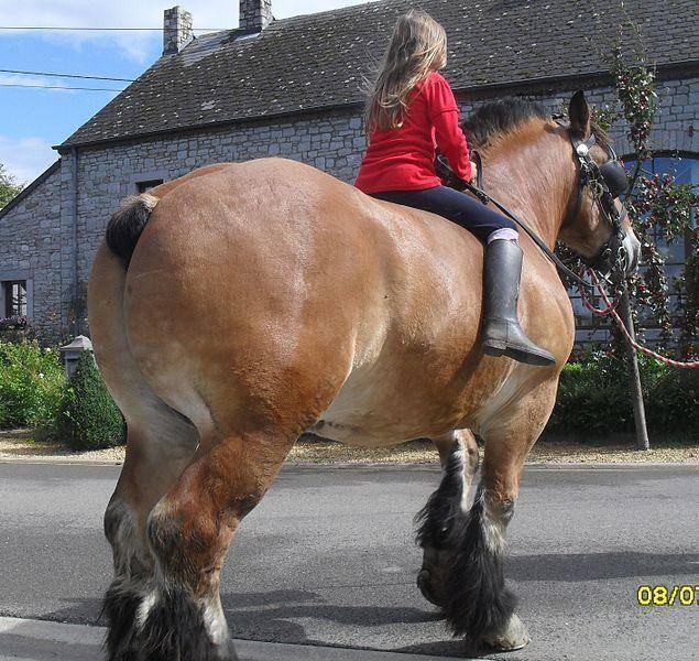 Описание лошадей породы русский тяжеловоз