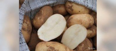 Удобрения для картофеля при посадке: какие лучше, в том числе минеральные и органические