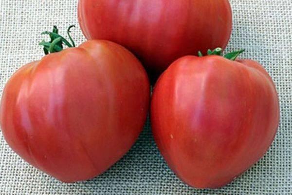 Крупный томат воловье сердце: характеристика и описание сорта