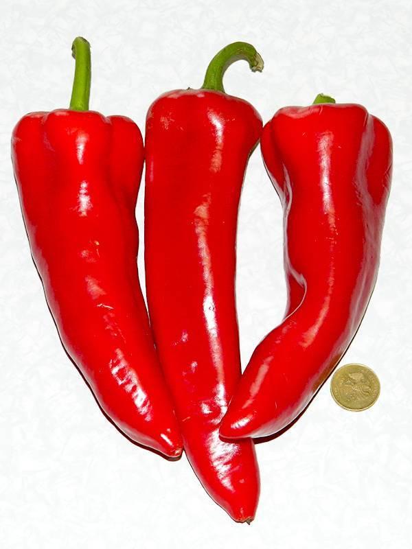 Перец рамиро: описание сорта, фото, отзывы, характеристика плодов, достоинства и недостатки