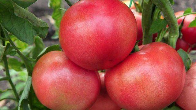 Томат малиновое чудо: характеристика и описание сорта, отзывы садоводов, фото, урожайность